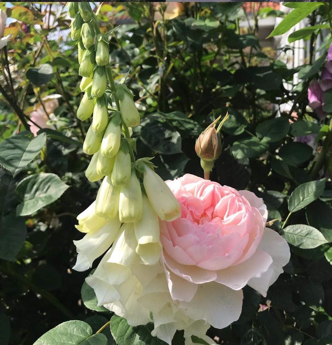 Landhaus Sommerfrische - Ferienwohnungen in Westerstede Rose